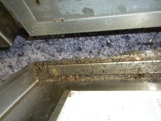 ゴキブリの巣には卵鞘や脱皮がらが散在する.jpg
