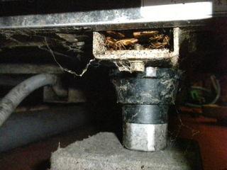 チャバネゴキブリがコールドテーブルの脚の空隙に密集.jpg