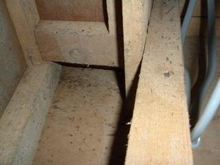 クロゴキブリの生息場所には特徴的なシミ.jpg