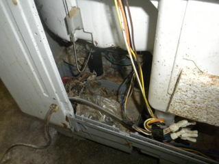 ゴキブリが生息する洗濯機の内部にあるさまざまなゴミ.jpg
