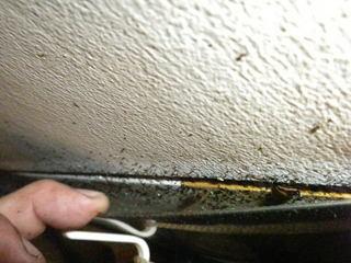 チャバネゴキブリが壁とステンレス板との隙間に.jpg